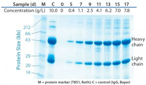 Figure 4: Quality of IgG1 produced during 17 days of high–cell-density fed-batch culture at 1,000-L scale assessd using sodium-dodecyl sulfate polyacrylamide gel electrophoresis (SDS PAGE) under reduced conditions and Coomassie blue staining; in addition to samples from the process start and days 5, 7, 9, 11, 13, 15, and 17 post-inoculum, the graph shows a marker (T851 from Roth) and control (IgG from Bayer).