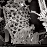 Photo 1: Scanning electron microscopy (SEM) shows the porous structure of Celpure 300 diatomaceous earth (magnitude 1,000 times).