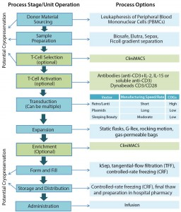 Figure 2: Exemplar immunotherapy bioprocess