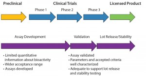 Figure 1: Time frame for potency assay development and validation