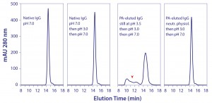 Figure 5: Elevated vulnerability of protein A–eluted IgG to aggregation by exposure to pH 3.0