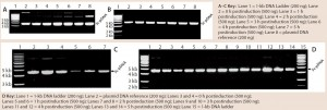 Figure 4: 0.8% agarose gel electrophoresis (AGE) analysis of a model plasmid (average 6.0 kb) produced throughout the culture of E. coli strain DH1postinduction, using different systems and scales of operation; each well was loaded with 200 ng or 500 ng of plasmid.