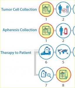 Figure 3: Logistics complexity of an autologous cell therapy (detail) — standardization