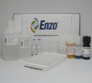 enzo-kit