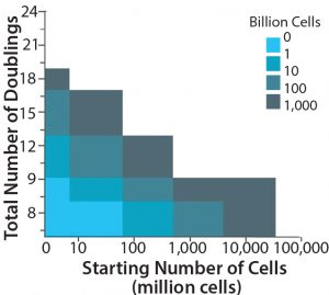 Figure 3: Maximum achievable lot size in cells per lot for each number of cells inoculated– total number of doublings combination; the starting number of cells is the initial number of cells retrieved from a donor. The white region indicates maximum achieved lot sizes >1012 cells/lot.