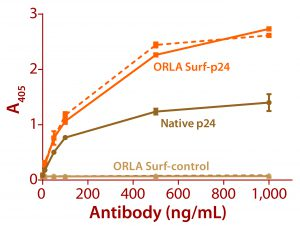 Figure 3: ELISA data comparing native p24 antigen and OrlaSURF p24 antigen binding to anti-HIV p24 monoclonal antibodies; the dotted line shows data for an antibody that recognized the OrlaSURF p24 antigen but not the native antigen, and the continuous line shows data for an antibody that recognized both. Thermo Scientific NUNC maxisorp plates were used, with both proteins adsorbed overnight followed by wash, antibody binding, wash, secondary antibody alk-phos conjugate, wash, and detection by substrate turnover.