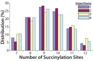 Figure 4: Four injections of one succinylated recombinant protein sample were made into an Applied Biosystems QSTAR mass spectrometer from Thermo Fisher Scientific. The resulting charge state data were deconvoluted to reveal the distribution of all succinylated species. Peaks accounting for <3% of the total peak area were discarded, and the area distribution of the remaining peaks was determined. In this case, the succinylated species ranged from seven to 12 sites each.