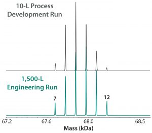 Figure 7: ESI-MS infusion assay results for a 10-L succinylation process batch and a 1,500-L engineering run illustrate very similar succinylation patterns. Numbers on the peaks indicate the number of succinylated sites in each peak.