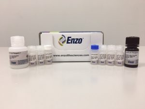 enzo_110816-kit