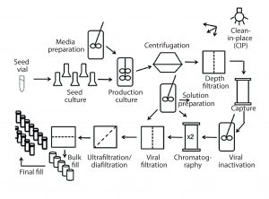 Figure 1: Process flow diagram for monoclonal antibody production using CHO cells; this figure was used to guide coverage of different unit operations and ensure that course material was in the context of a complete process for biopharmaceutical production.