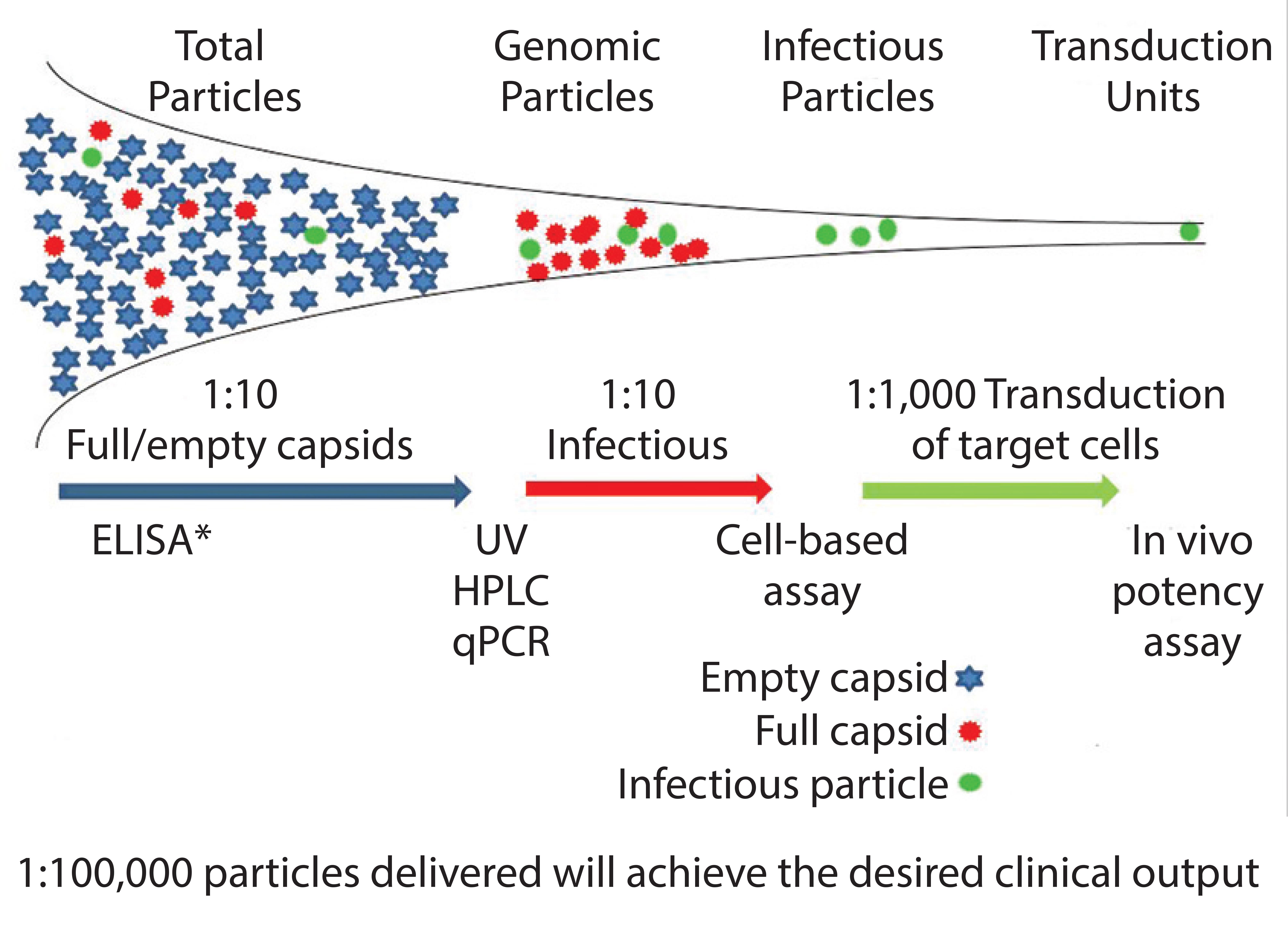 Development Approaches To Adenoassociated Virus Production