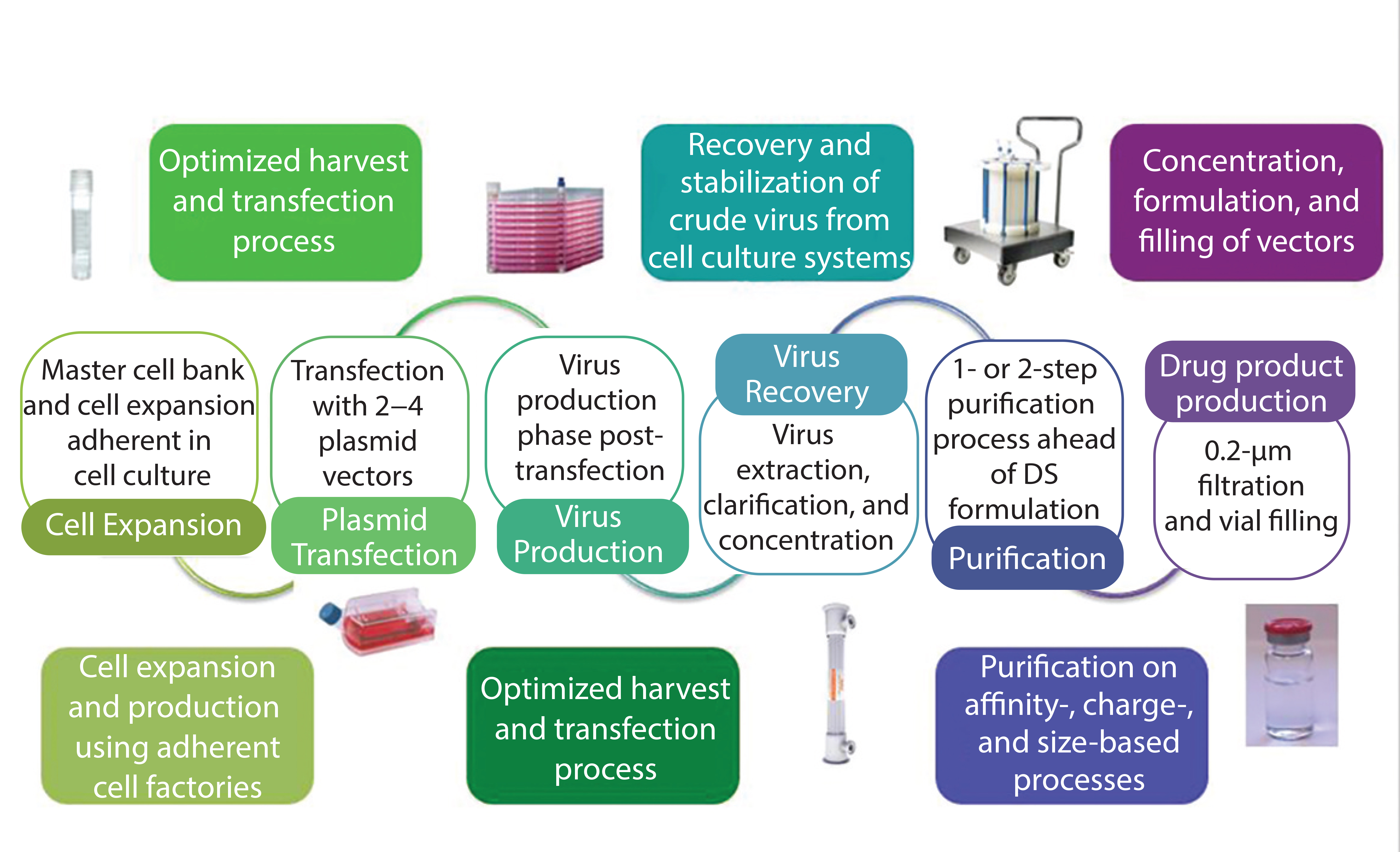 Figure 2 Production Stages In Transient AAV Manufacturing