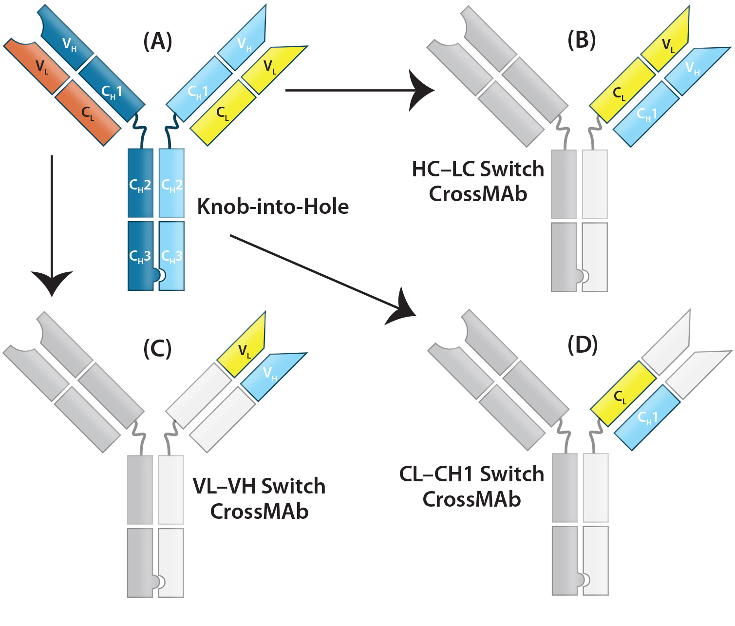 Therapeutic Igg Like Bispecific Antibodies Modular Versatility And Split Charge Switchc A Brooks 2005 Figure 3 Crossmab Structure The Technology Uses Combination Of Kih To Promote Hc Heterodimerization Domain Switching Between Lc