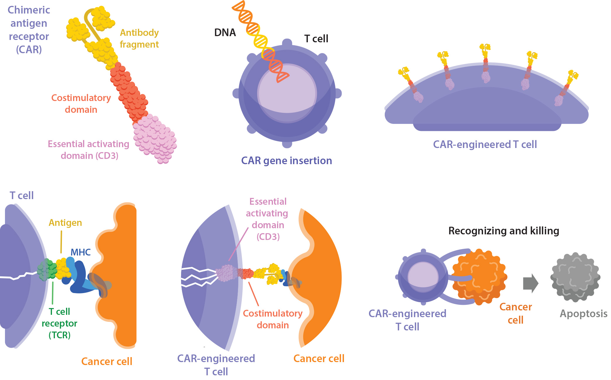 Partnerships in Immunotherapy for the Future of Cancer