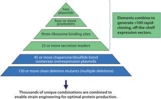 Pseudomonas fluorescens Expression Technology for Subunit